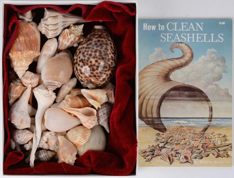 Een verzameling schelpen uit Florida. Eiland Sanibel. Met begeleidend boekje.