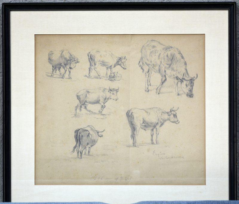 """""""Koeien"""". Een studietekening. Portlood op papier. Gesigneerd."""