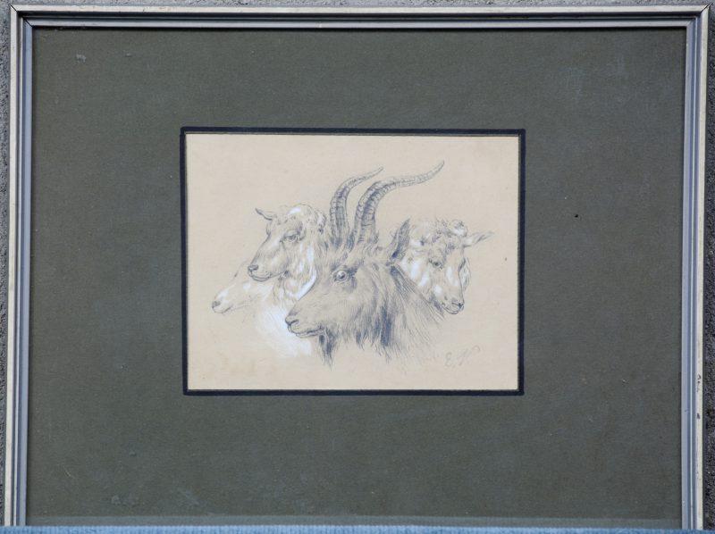 """""""Studie van geiten en schapen"""". Potlood op papier. Gemonogrameerd."""