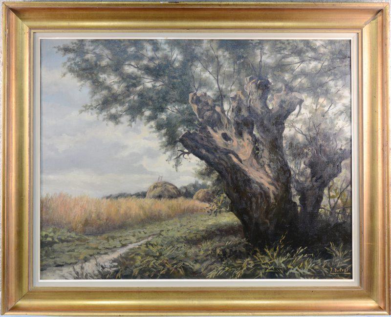 """""""Oude boom bij een korenveld"""". Olieverf op doek. Gesigneerd."""