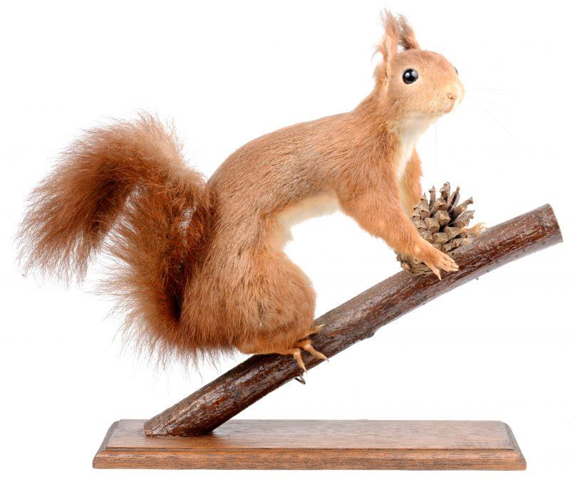 Een opgezet eekhoorntje op een tak.