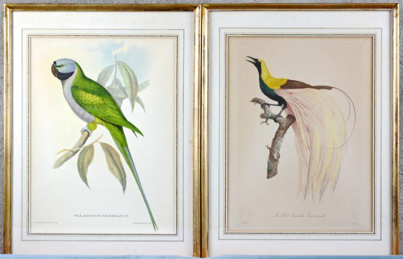 """Palaeornis Derbianus"" & ""Le Petit Paradis Emeraude"". Twee XIXe eeuwse lithografieën, respectievelijk Engels en Frans"