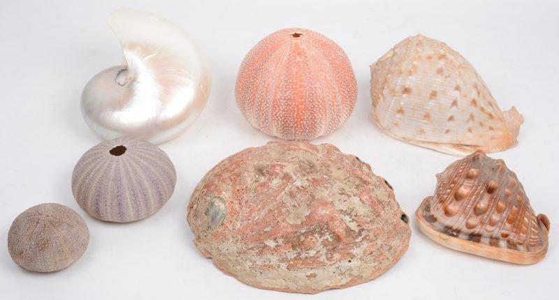 Een pot van vier verschillende zeeschelpen en drie zee-egels.