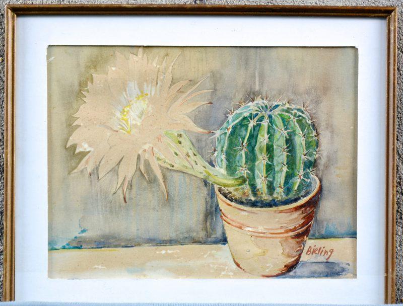 """""""Cactus"""". Aquarel op papier. Gesigneerd 'Bieling'."""