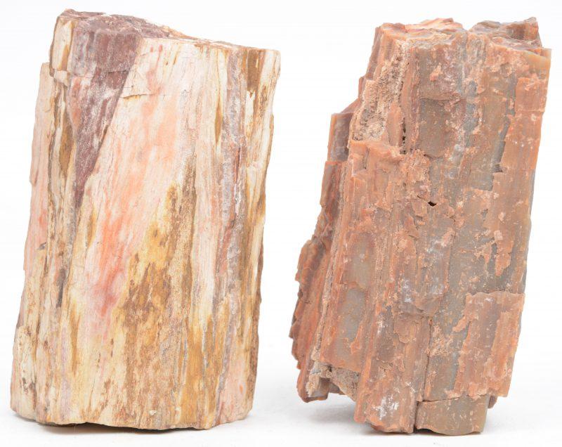 Een paar fracties gepetrifieerd hout.