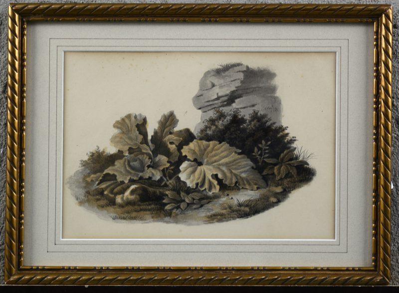 """""""Begroeiing bij een rots"""". Potlood en aquarel op papier. Gesigneerd en gedateerd 1862."""